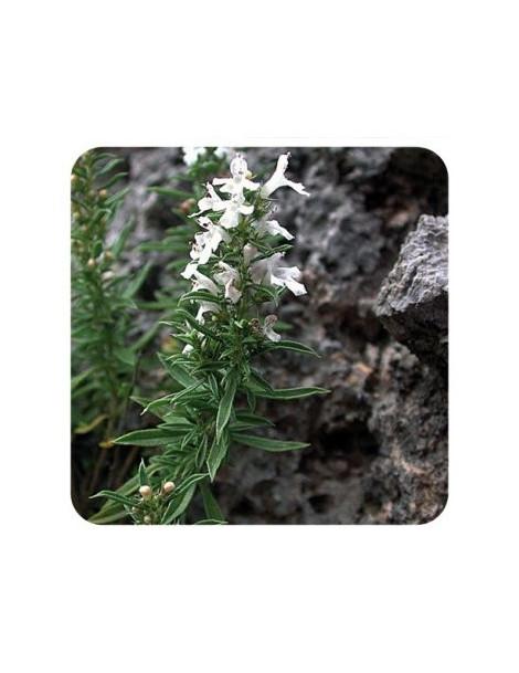Sarriette des montagnes 5 ml Pranarom