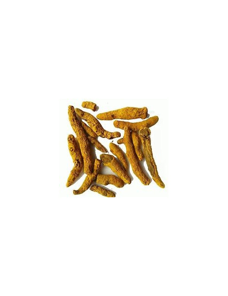 Curcuma Madras Rhizome bio 100 gr Herboristerie de Paris