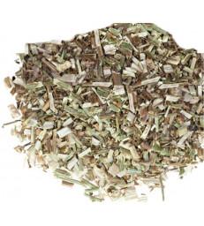 Chicorée feuilles 100 gr Herboristerie de Paris