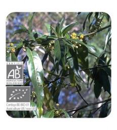 Huile essentielle de Verveine exotique - Litsée citronnée 10 ml Herboristerie de paris
