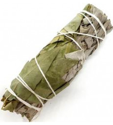 Fagot de Sauge blanche + Eucalyptus 30g Herboristerie de Paris